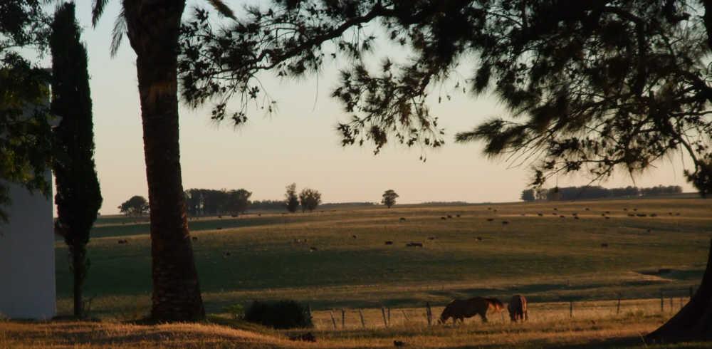 Estancia, pampa, horses