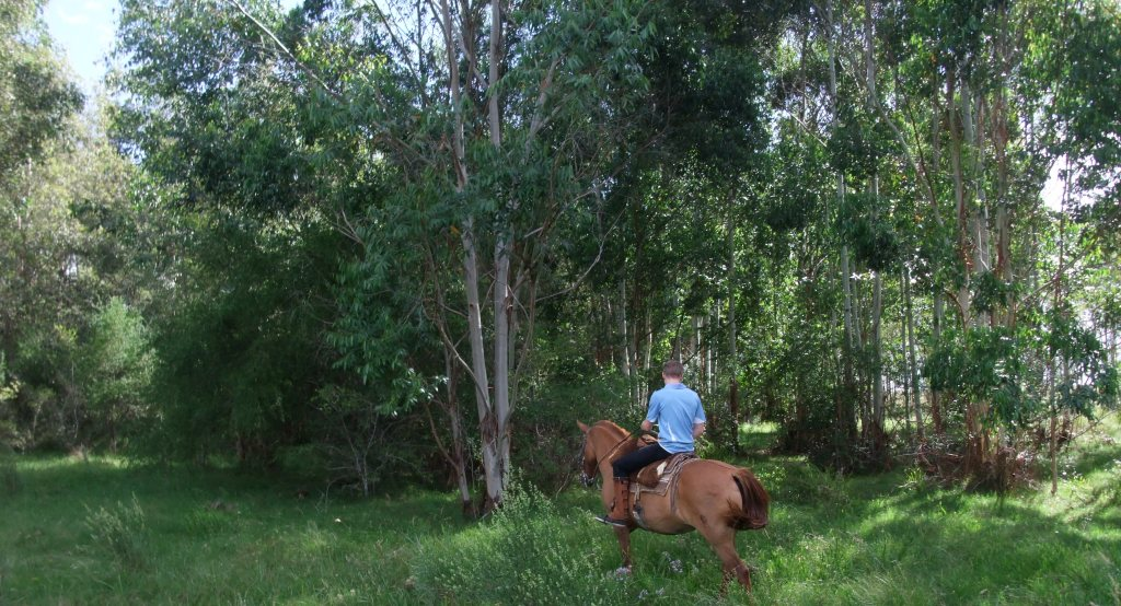 horse riding forest uruguay